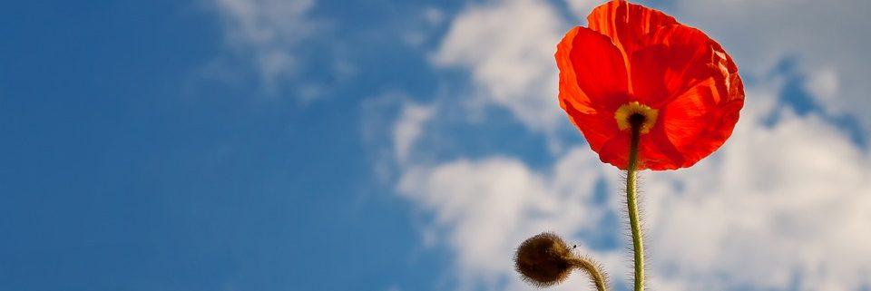 flor i el cel